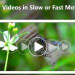 Video Hızlandırma Programı